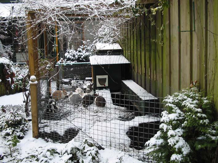 Tuin Afzetten Kat : Konijnen in de tuin
